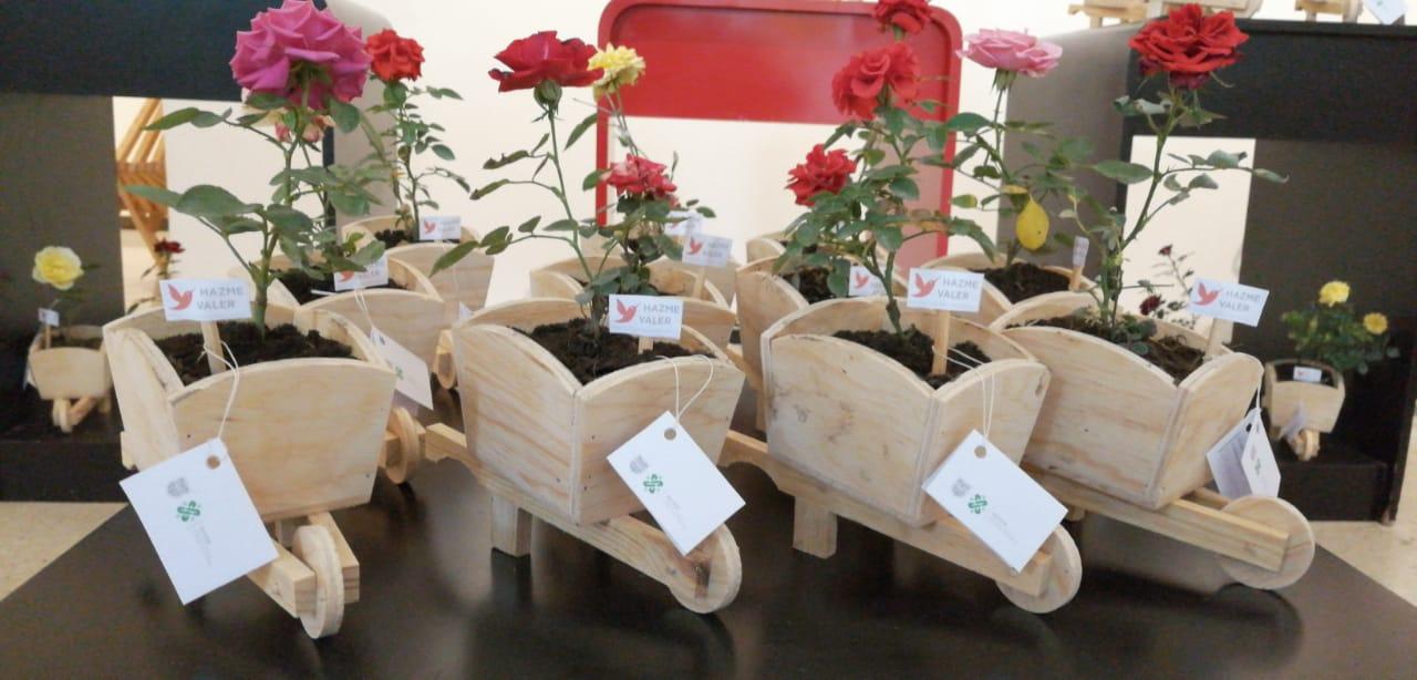 Rosas SSP (2).jpeg