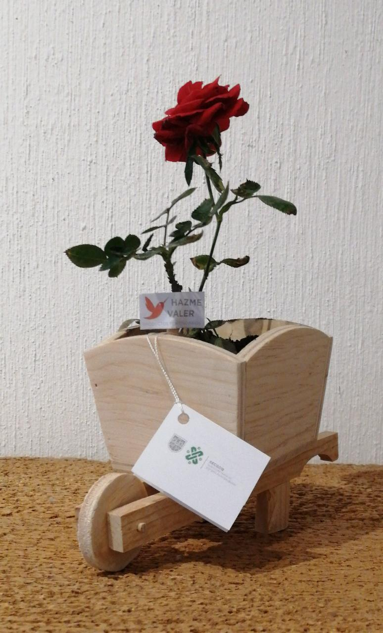 Rosas SSP (3).jpeg